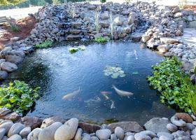Large, beautiful Koi pond next to covered patios
